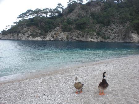 playas-turquia.jpg